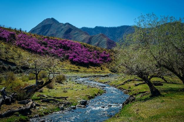 Bergstroom tussen bloeiende heuvels en bergen