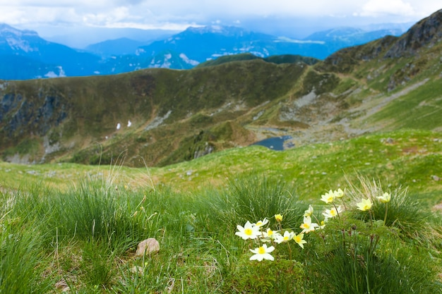 Bergtop panorama. gele bloemen met meer op achtergrond. pulsatilla alpina uit italiaanse alpen