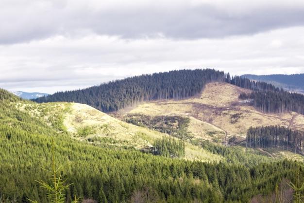 Bergtoppen met gekapt bos