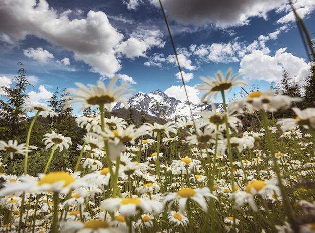 Bergweide in alaska, zomerseizoen