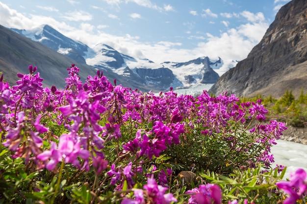 Bergweide in zonnige dag. natuurlijk zomerlandschap. bergen in alaska.