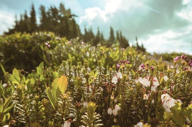 Bergweide in zonnige dag. natuurlijke zomer landschap. bergen in alaska.