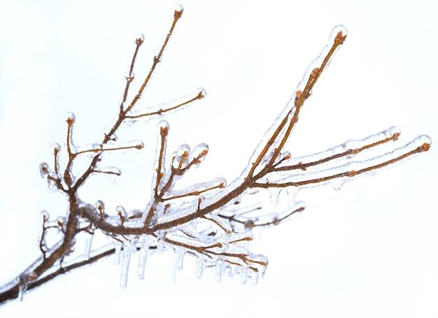 Berijpte takken van een boom bedekt met ijs en ijspegels op wit