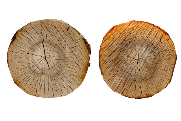 Berk log gesneden set geïsoleerd op een witte achtergrond. hoge kwaliteit foto