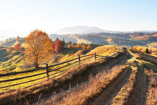 Berkbos in zonnige middag terwijl de herfstseizoen.