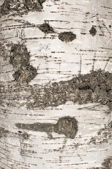 Berkenschors textuur