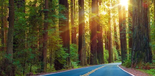Beroemde redwood highway