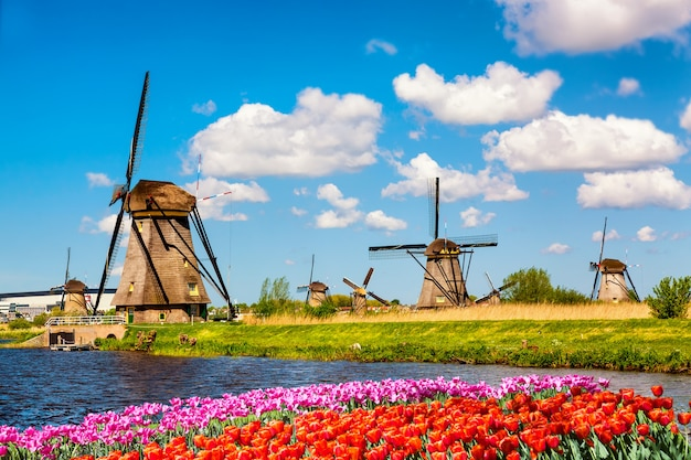 Beroemde windmolens in dorp kinderdijk met een bloembed van tulpenbloemen in nederland