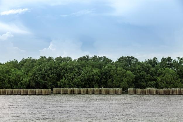 Bescherm de mangroveboom en land op de oceanside met een bamboewand voor blokkerende oceaangolven. (uitzicht op landschap)