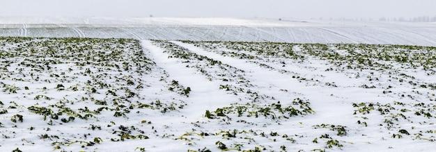 Besneeuwd geploegd veld, een landelijk uitzicht met een besneeuwd veld op een boerderij