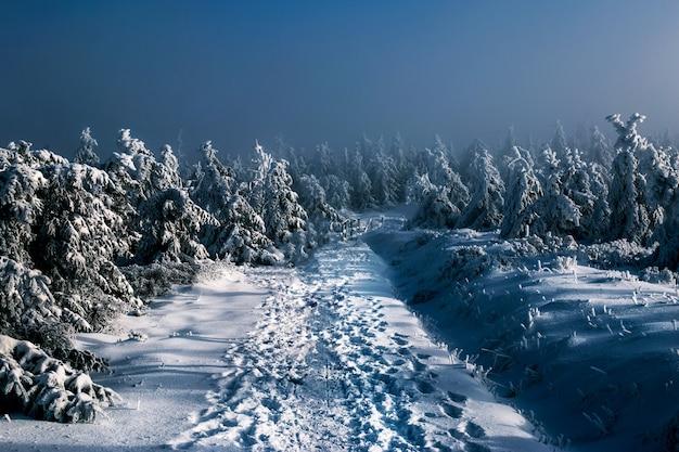 Besneeuwd nachtbos, veel met sneeuw bedekte bomen 's nachts