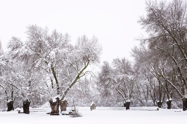 Besneeuwd park op een koude winterdag