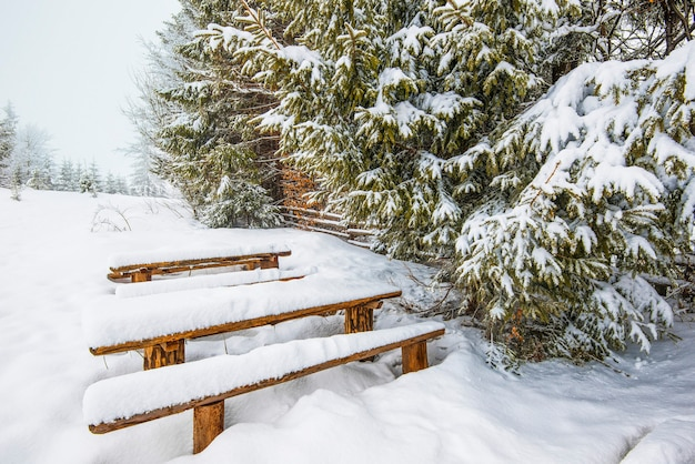 Besneeuwde banken staan in hoge sneeuwbanken in de buurt van besneeuwde majestueuze sparren op een ijzige winterdag