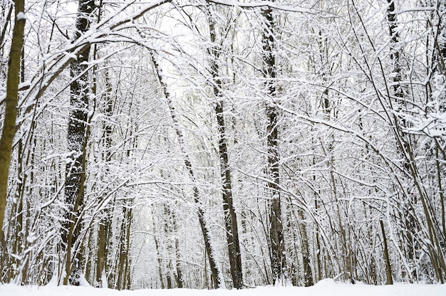 Besneeuwde bomen in het besneeuwde winterbos