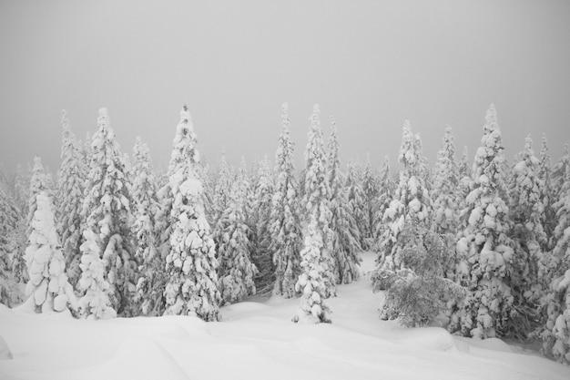 Besneeuwde bomen in het bos. alles is bedekt met sneeuw.