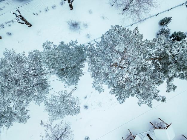 Besneeuwde bomen in het koude winterseizoen bovenaanzicht b