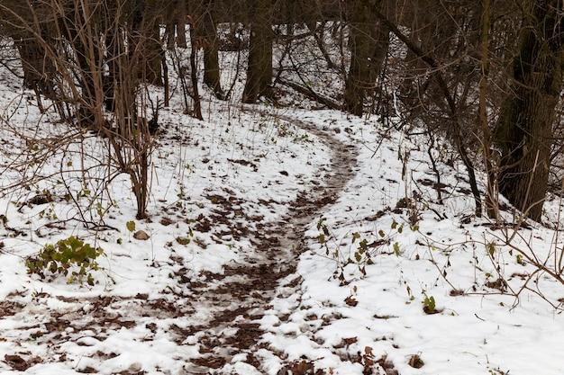 Besneeuwde bomen in het winterseizoen, wintermaanden na en tijdens sneeuwval in het bos en in de natuur