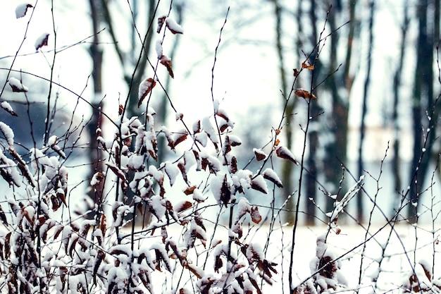 Besneeuwde boomtakken met droge bladeren in het bos