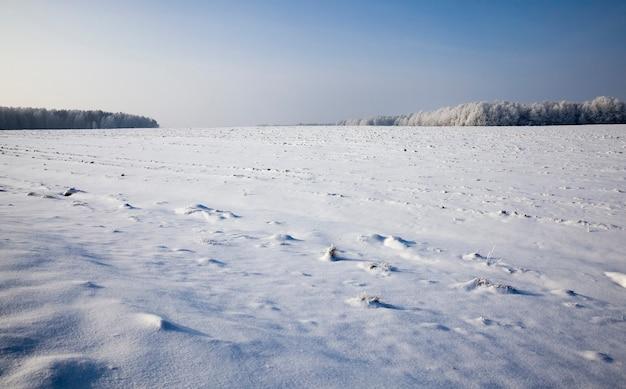 Besneeuwde landbouwgrond met bevroren en gedroogde planten in de winter, het koude ijzige winterweer op de natuur