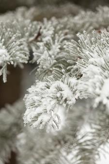 Besneeuwde pijnboomtakken van bladeren