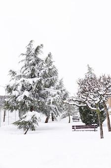 Besneeuwde spar in de winter
