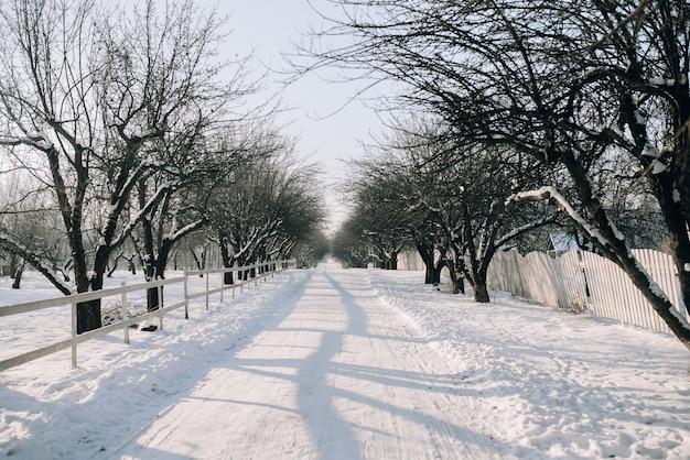 Besneeuwde steeg in het park op een zonnige dag