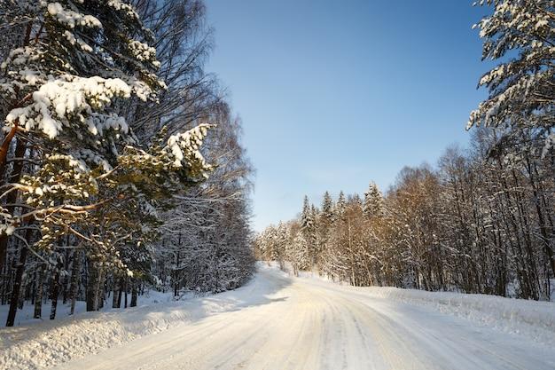 Besneeuwde straat omgeven door pijnbomen