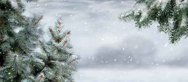 Besneeuwde takken van sparren tijdens een sneeuwval