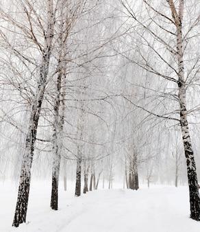 Besneeuwde weg de weg bedekt met sneeuw tijdens de winter.