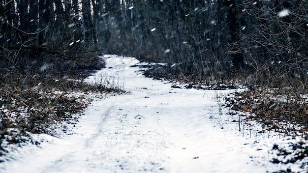 Besneeuwde weg in een donker bos tijdens een sneeuwval