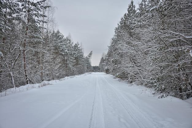 Besneeuwde weg tussen winterbos, winterweg, winterbos