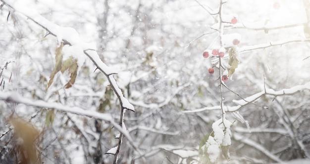Besneeuwde winter park en banken. park en pier voor het voeren van eenden en duiven. de eerste sneeuw bedekte het herfstpark.