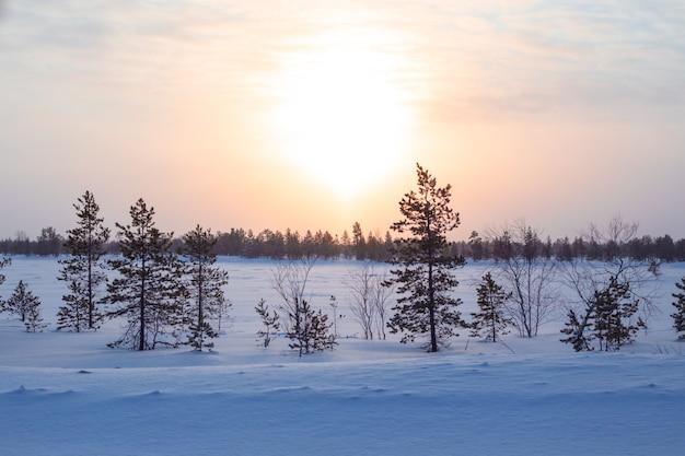 Besneeuwde winterdageraad in de toendra in noord-rusland