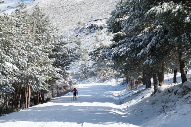 Besneeuwde winterlandschap op de berg met besneeuwde pijnbomen rond. skiër stijgt.