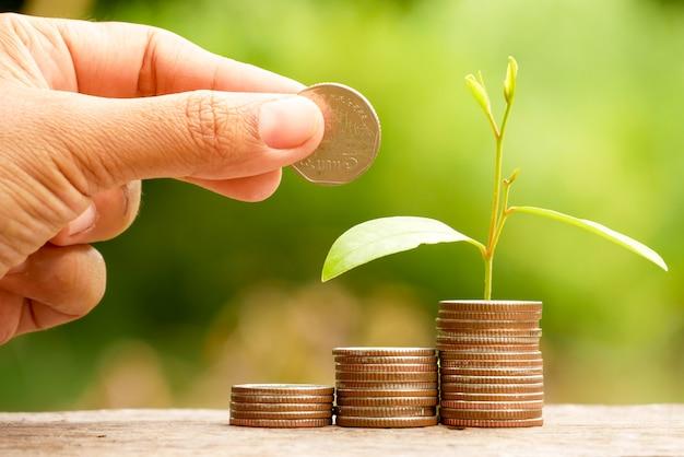 Bespaar geld voor investeringsconcept. plant groeit uit munten