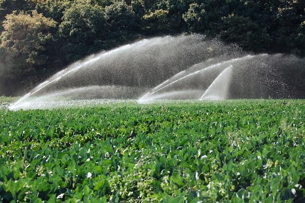 Besproeiingssysteem voor oogst op aanplanting in een heldere zonnige dag.