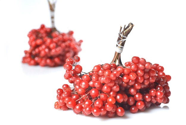 Bessen van rode viburnum