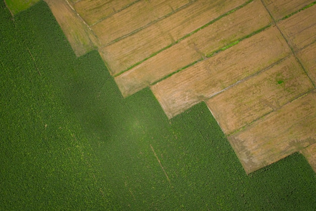 Bestandsdetails en oppervlakte-rij van het landbouwgebied zijn maïsvelden en rijstvelden van de luchtfoto van de boer