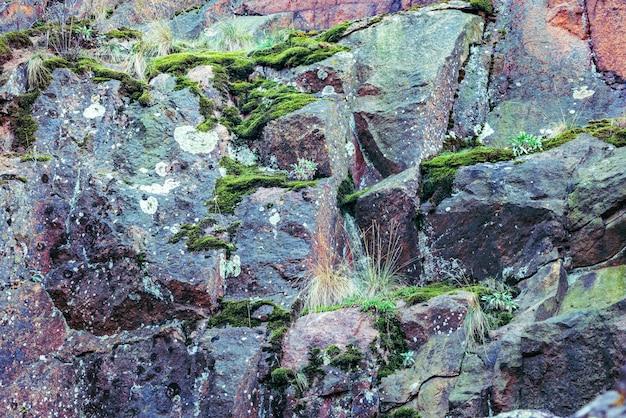 Betonfragment bedekt met schimmel als achtergrondstructuur