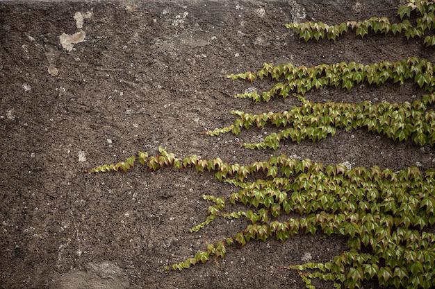 Betonnen muur met planten