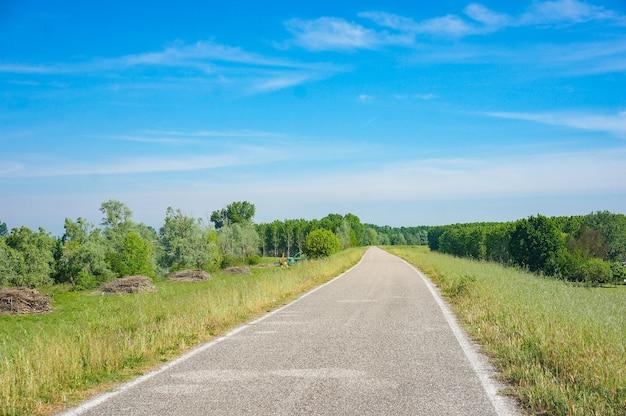 Betonweg omgeven door groene bomen met een blauwe lucht in de