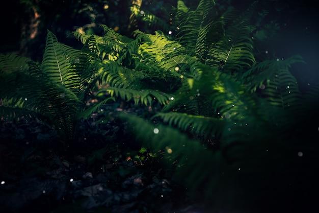 Betoverd bos, magische varens. groene heksenplanten, mystieke bosachtergrond, weidebloemen