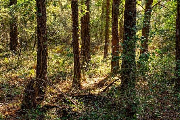 Betoverde bossen in de herfst