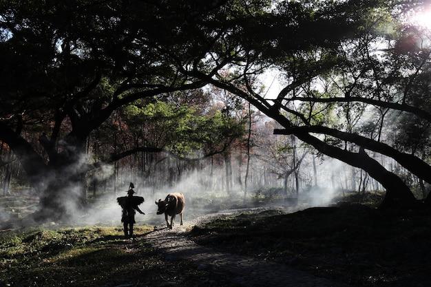 Betoverend beeld van een chinese man met een koe in het bos tijdens zonsopgang in xia pu, china