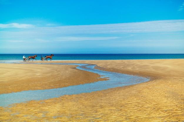 Betoverend beeld van paarden met strijdwagens op het gouden zand tegen een prachtige oceaan