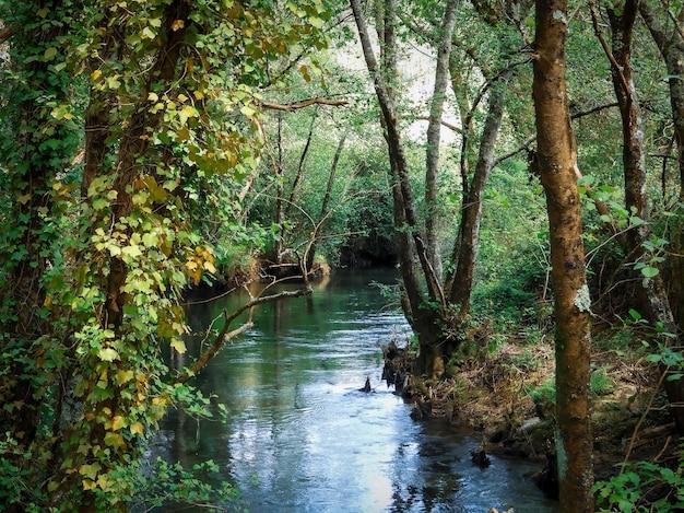 Betoverend landschap van dennenbosboom en prachtig meer