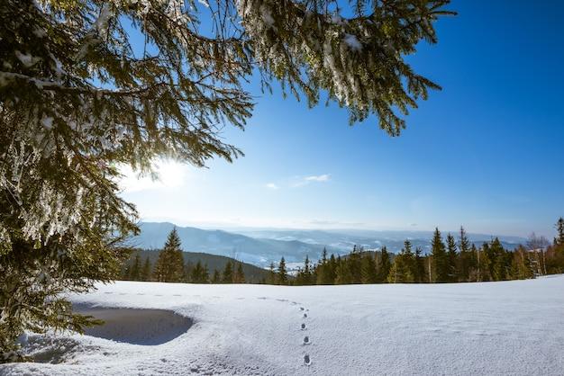Betoverend landschap van dicht bos dat groeit op besneeuwde heuvels tegen een achtergrond van blauwe lucht