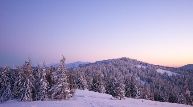 Betoverend landschap van dicht naaldbos dat groeit op besneeuwde heuvels tegen een achtergrond van blauwe hemel