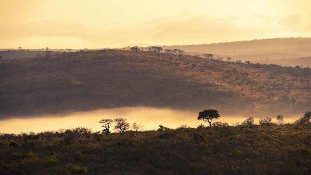 Betoverend landschap van oerwouden in zuid-afrika