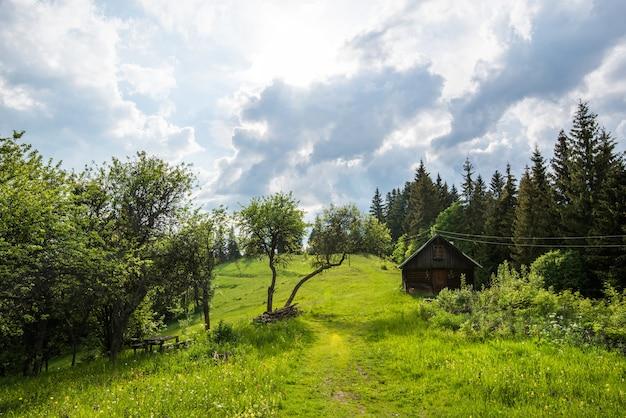 Betoverend mooi zomers landschap van een groene weide op een heuvel met uitzicht op een dicht naaldbos. bergen op een bewolkte warme zomerdag